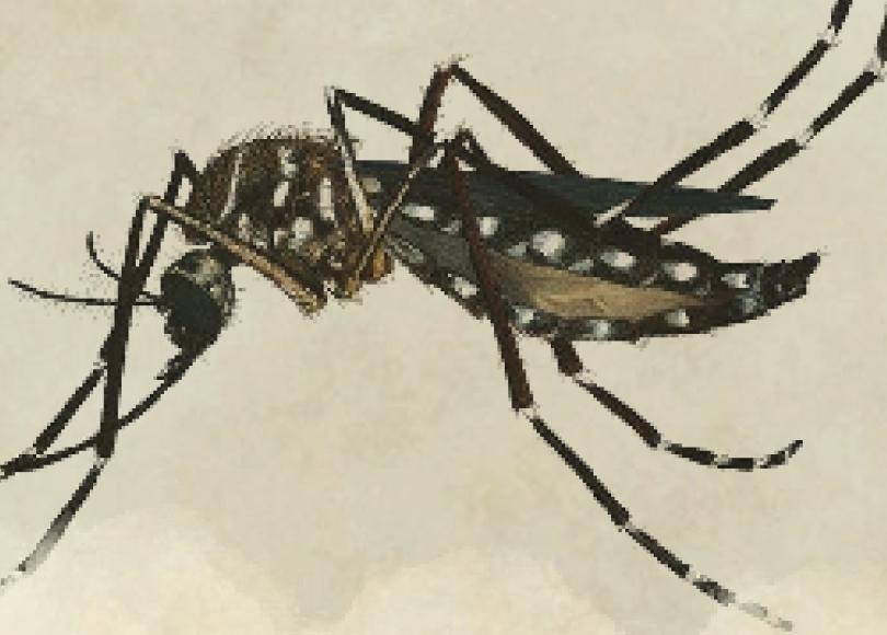 Mosquito da Dengue para D&D 5E